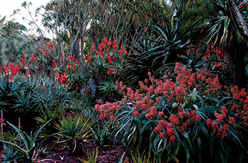 Ganna Walska Lotusland, botanical garden in USA