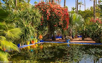 Majorelle Garden in Morocco