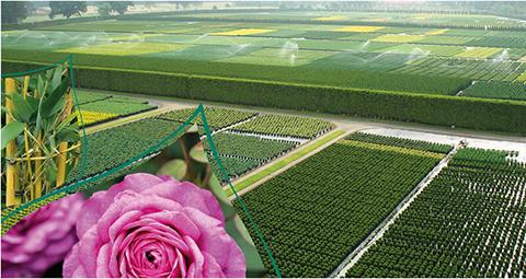 Quality plants - Ammerland