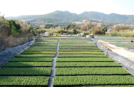 Production and export of young plants