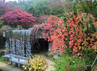 Dutch Castle Garden Arcen, rhododendron garden