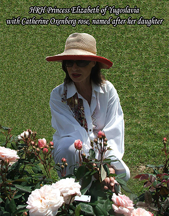 Oxenberg rose