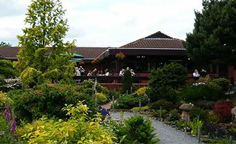 Ashwood Nurseries - traditional tea room
