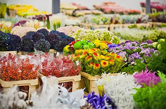 Russian distributor of cut flowers, house and outdoor plants