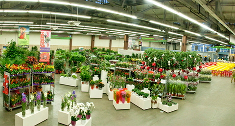 Cut flowers & plants distributor - 7flowers in Moscow