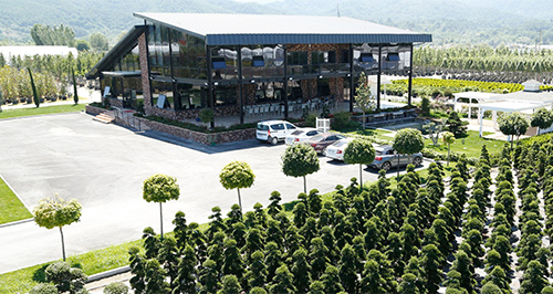 Ornamental plants - Sakarya Botanik Industry in Turkey
