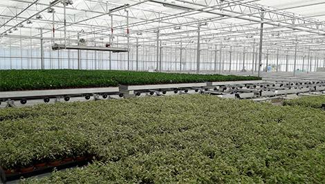 Tropical plants – Aardam Planten B.V.