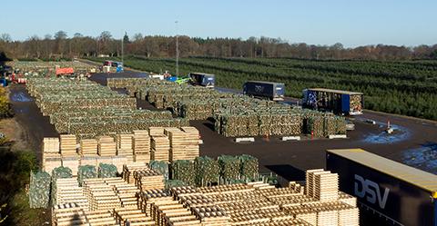 Christmas trees export - Arbodania A/S.
