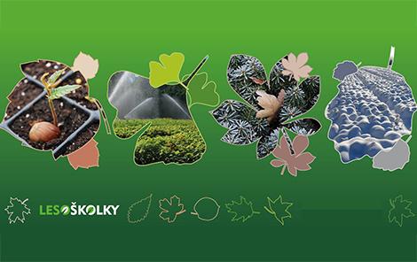 Forest tree nursery Lesoskolky