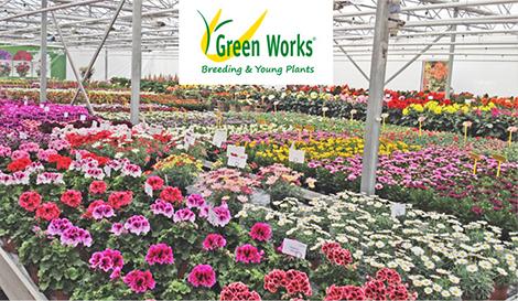 Paeonia & Ranunculus - Green Works International